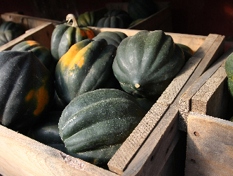 Acorn Squash is fresh and in season now!